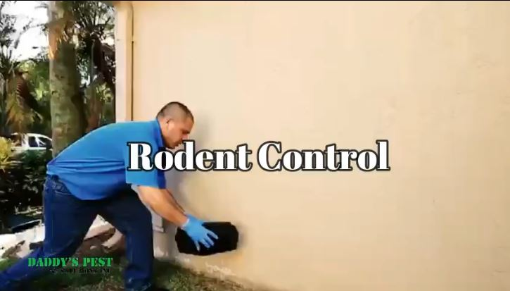 RodentControl_rats_and_mice